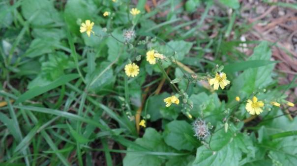 DSC07078_yellowflowers_fly
